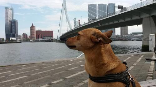 Magnífico alojamiento en Rotterdam