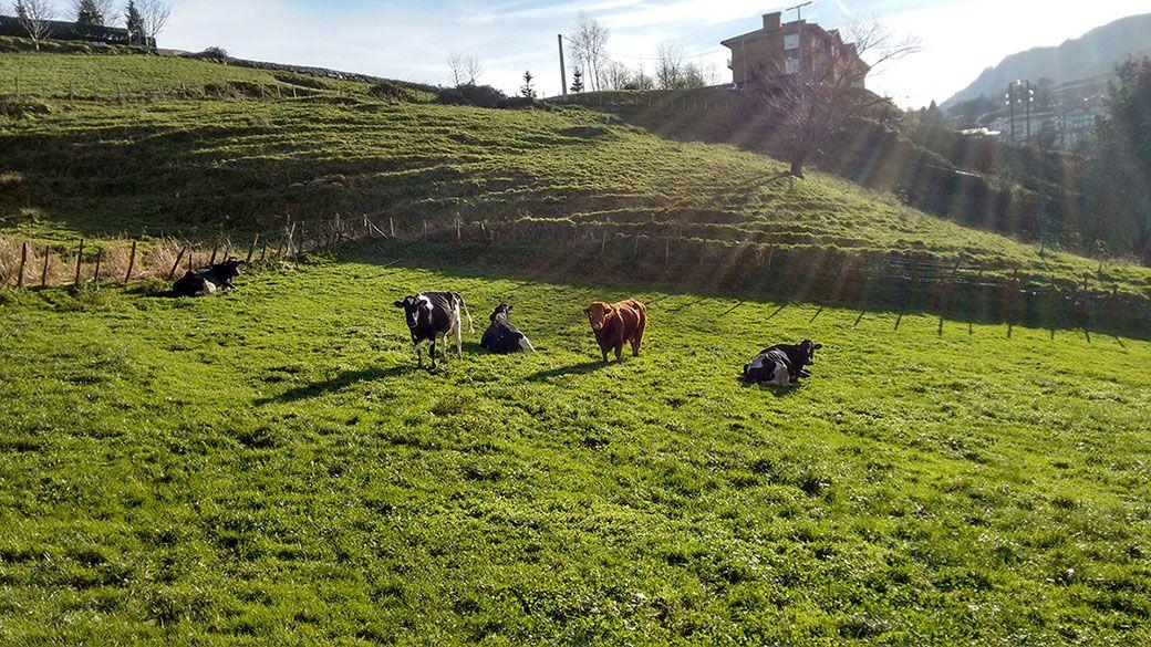 Animales de la granja del Agroturismo Azkue en el País Vasco