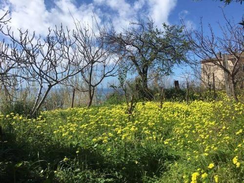 Residencia con jardín en Paola