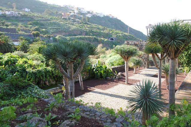 Apartamento en Icod de los Vinos con Ascensor, Lavadora (464064)