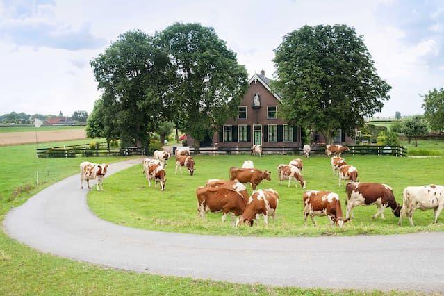 Chalet auf 60 m² in Nieuwveen