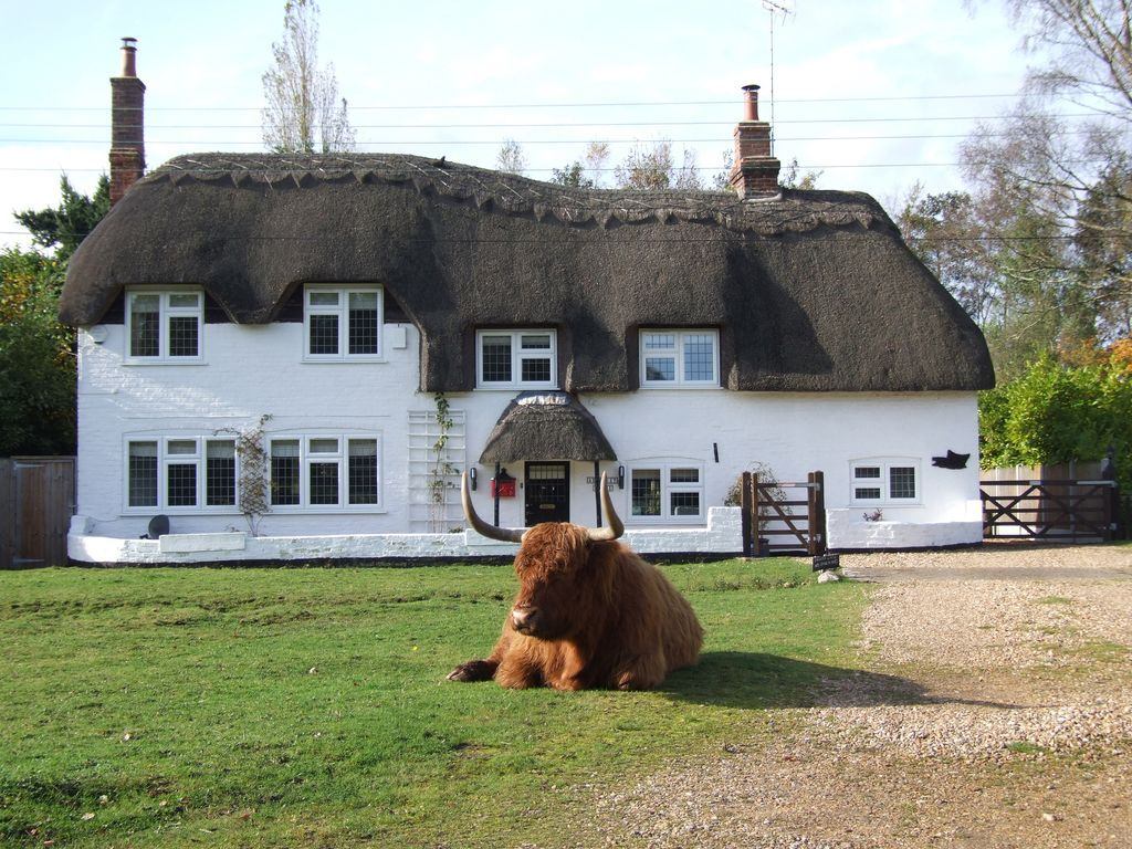 Tourist Flat in New forest of 3 rooms